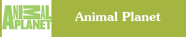 Смотреть канал Animal Planet онлайн через торрент стрим